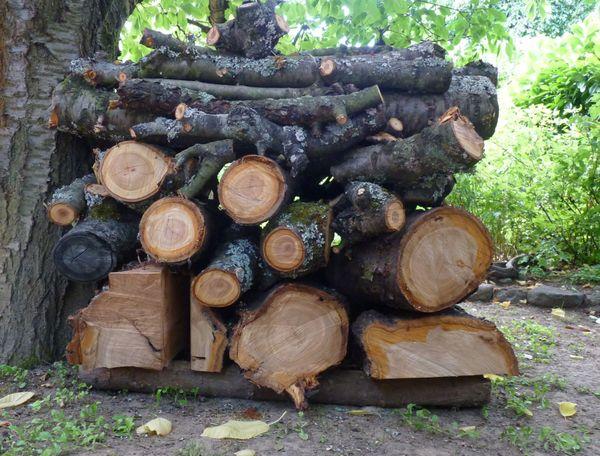 Holz vom Kirschbaum Kirschbaumholz