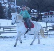 Chica du Peticlaux Camarque Pferd