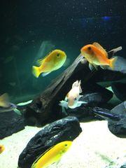 aquarium 150x40x50cm. 300liter