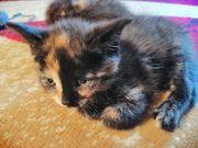 kleine Kätzchen abzugeben
