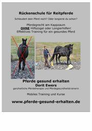 Pferdetraining Rehatraining Reituntericht