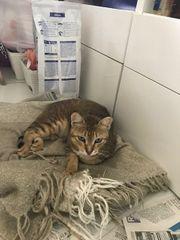 Katze Moca sucht ein Zuhause -
