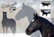 Memory Collage: Pferde: