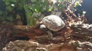 Griechische Landschildkröten aus 2018