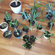 Zimmerpflanzen günstig weiterzugeben