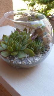 Dekoglas mit Haus und Dachwurzpflanzen
