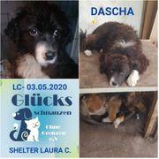 Unsere superliebe Dascha sucht ein