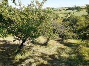 Gartengrundstück mit Hütte zu verpachten