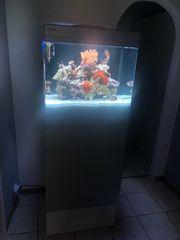 Aquarium Meerwasser Red Sea Max