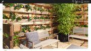 Pool Teich Gartenmauer Baggern Baumschnitt