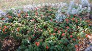 Gartenhelfer Gärtner Gartenpflege Gartenarbeit Gartenarbeiter
