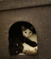 Unser Katerduo Cozy und Victor