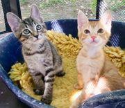 Jackpot für Katzenliebhaber