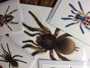 Vogelspinnen Kunst Art Arachno-World