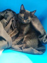 Katzenbaby sucht ein neues Zuhause