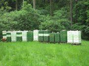 3 Bienenvölker auf DN zu