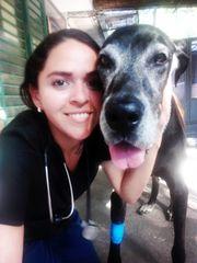 Professionelle Haustierbetreuung Professional pet sitter