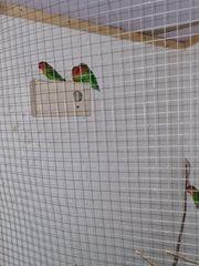 pfirschköpchen 6 vögel