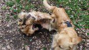 Ganzwöchige Hundebetreuung Hundesitting