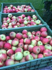 verkaufe frische Äpfel süss kg