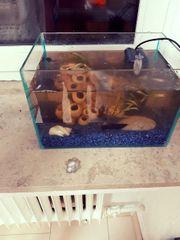 aquarim 30 20cm mit fische