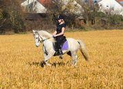 Schimmel Pony