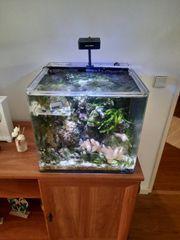 Nano Meerwasser Aquarium 65 L