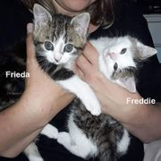 Frieda Freddie - 3 Monate - Europäische