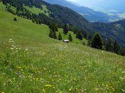 Kaufe landwirtschaftliche Wiese in Vorarlberg