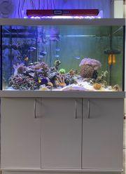 komplettes Meerwasseraquarium 120x70x70