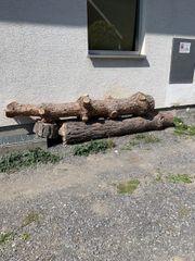 2 Baumstämme Brennholz