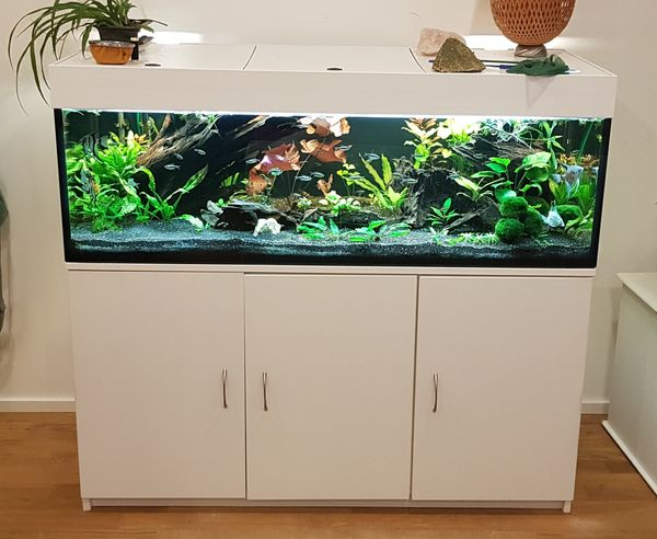 Aquarium 260l mit Schrank sämtlichem