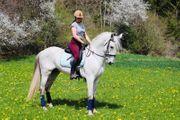 9jähriger PRE Hengst Dressurpferd Freizeitpferd