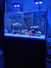 Meerwasser Aquarium Komplett System Red