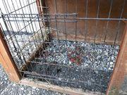 Stall zu verschenken Kaninchen Hasen