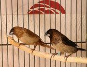Mehrere Vögel suchen liebevolles Heim