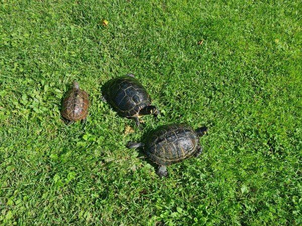 3 Schildkröten