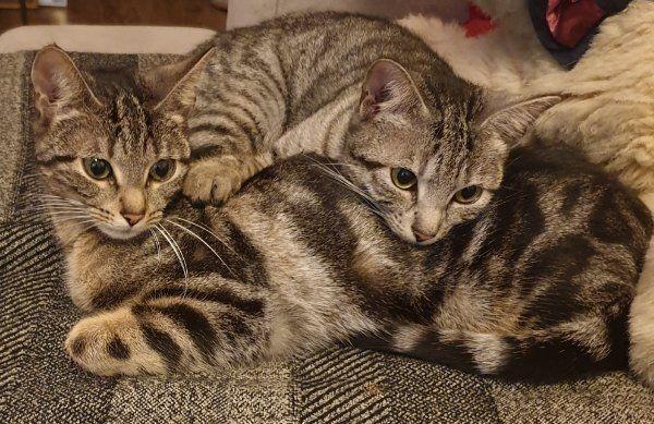 Katzenkittz suchen ein neues liebevolle