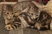 Katzenbabys suchen eine neues liebevolle