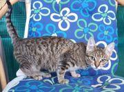 Mimi Kuschelkätzchen sucht Familie mit