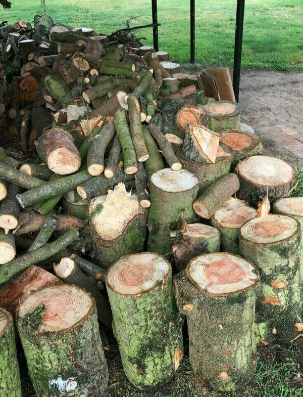 frisches Brennholz Kaminholz 30EUR pro