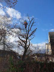 Sturmschaden Baumfällung Baumfäller Baum fällen