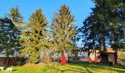 3 Bäume fällen in Kirrlach