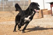 MACHIN - aktiver Junghund BorderCollie-mix