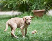 Selma zurückhaltendes Hundemädchen ca 3