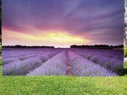 Fototapete Lavendelfeld vor Abendhimmel in