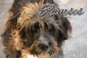 Ramses sucht seinen Frisör