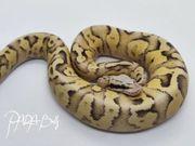 1 0 Vanilla Scream Pastel
