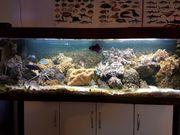 Meerwasseraquarium 700L Komplettset