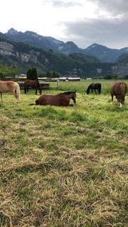 Freier Pferde Einstellplatz im Offenstall